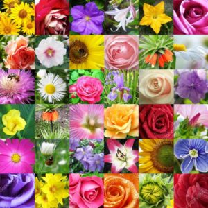 depositphotos_8606400-stock-photo-collage-from-different-beautiful-flowers